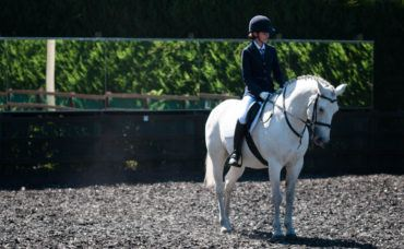 Pony Club Competition, Pony Club Competition