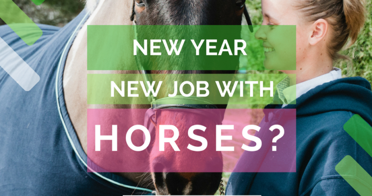 10 Top Tips to a successful career with horses