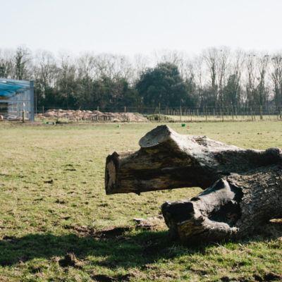 Lavant Equestrian