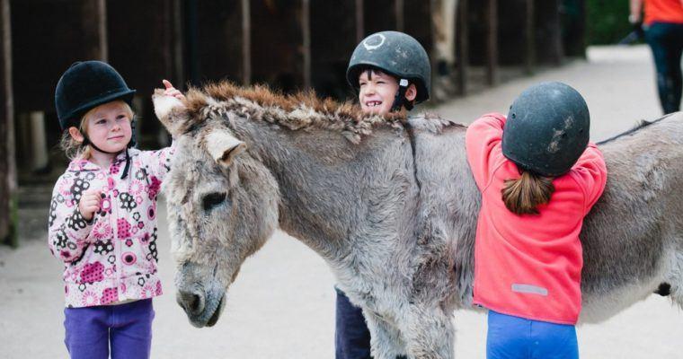 donkey diary