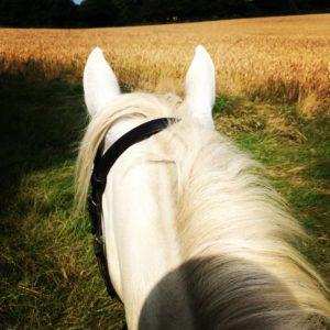 Clare's pony diary