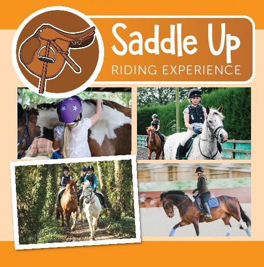 """""""Saddle Up"""""""