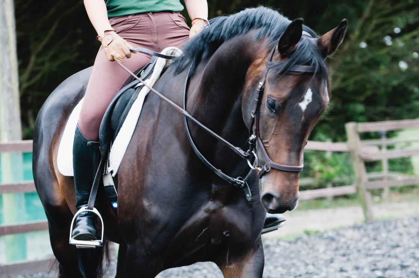 Understanding Dressage Clinic Lavant Equestrian