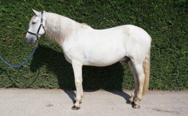 Pegasus, Pegasus